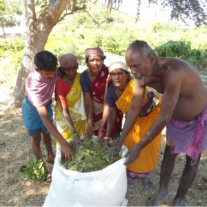 Organic manure from neem leaves